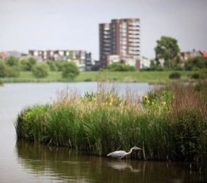 The London Wetland Centre Celebrate Their 10th Anniversary